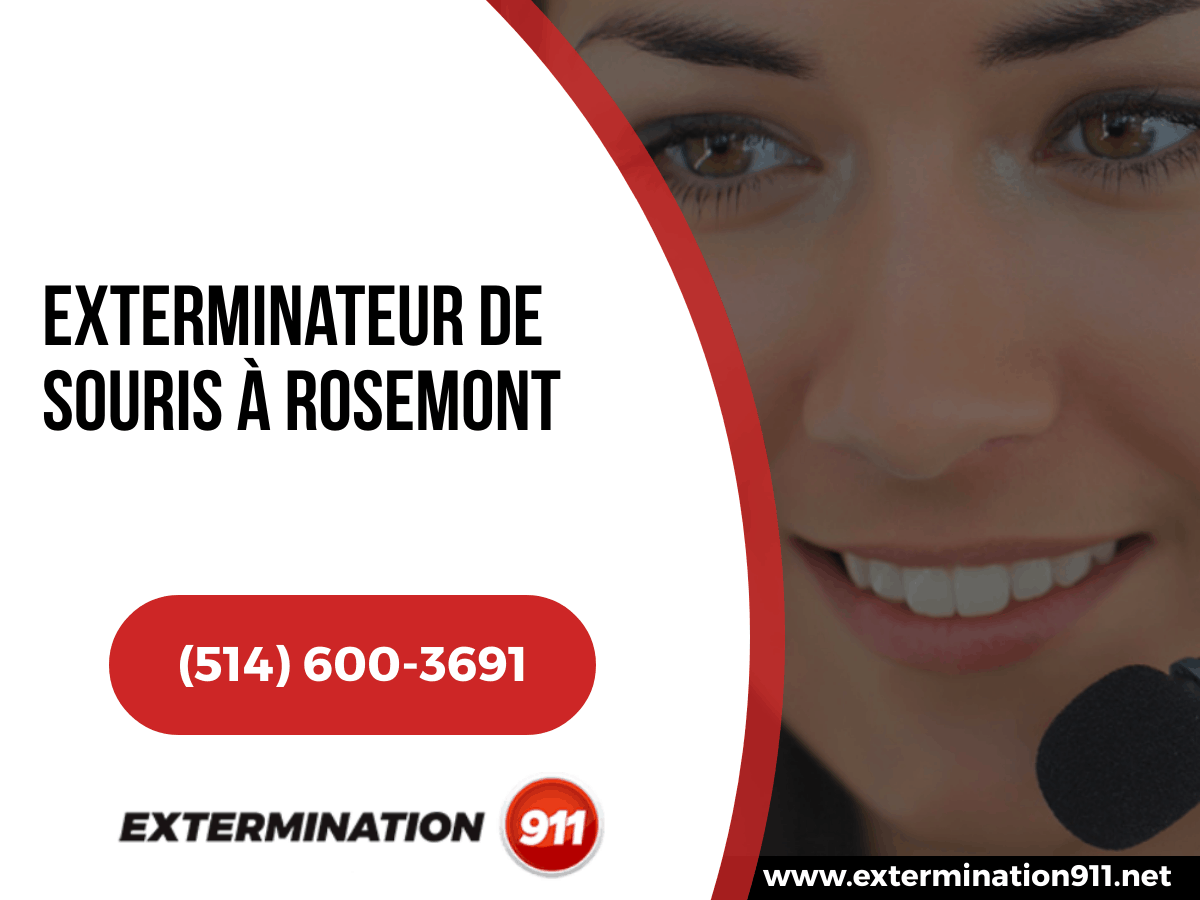 Exterminateur De Souris à Rosemont