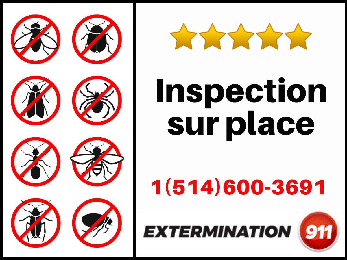 Inspection Sur Place 0001